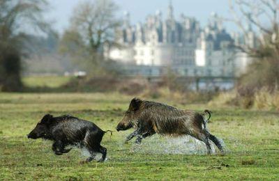Macron ne veut pas qu'on l'emmerde avec le bien-etre animal.In politique et animaux.