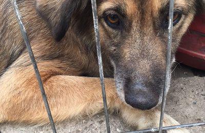 15 chiens en très grande urgence cherchent des parrains et des marraines