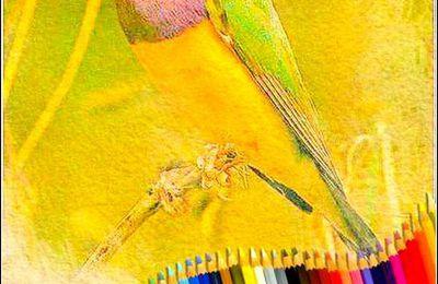 Les couleurs en images - dessin