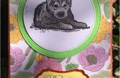 Une jolie petite carte d'anniversaire sur le thème des chiens et chats