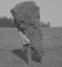 Le vieux paysan.