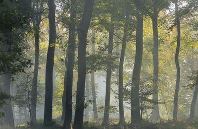 2 témoins font une étrange rencontre dans une forêt de la Seine-Maritime