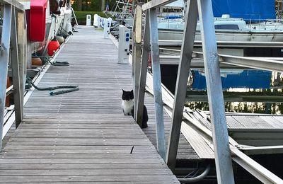 Le chat de port