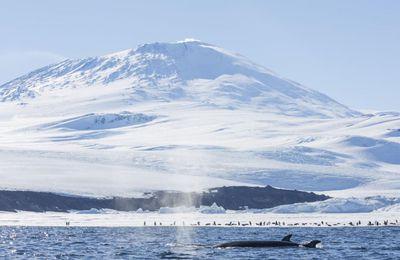 La calotte glaciaire de l'Antarctique occidental abrite une centaine de volcans