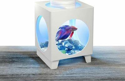 Pourquoi il ne faut VRAIMENT pas acheter : des lampes de chevet avec un poisson vivant...