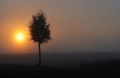 Le soleil d'or...
