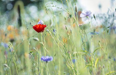 Mein Bild vom Teutoburger Wald #6 – Britta
