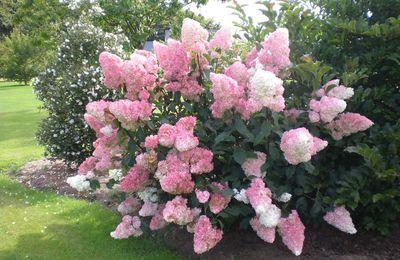 Belles couleurs dans mon jardin!