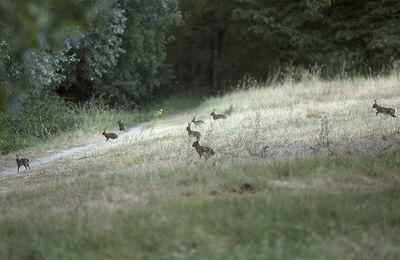 Les petits lapins de garenne ...