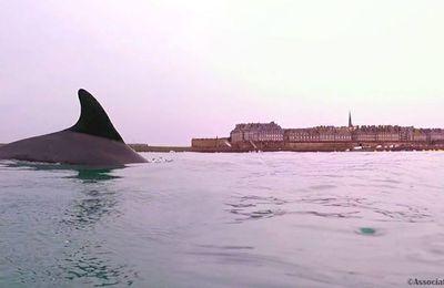 Fiete, le dauphin qui voyage et qui fait voyager!