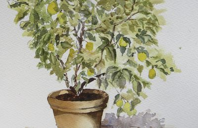 Mon beau citronnier...de Toscane