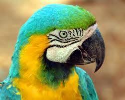 Pauvre perroquet