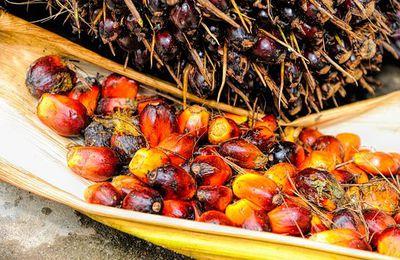 La chasse à l'huile de palme est-elle justifiée ?