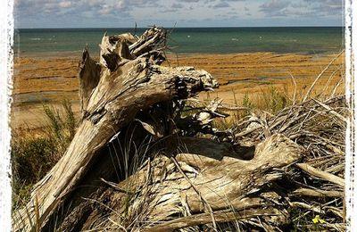 Derek Walcott, poète des Caraïbes : Le Royaume du fruit-étoile, Heureux le voyageur.