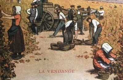 Le feuilleton de l'été : l'histoire œnologique de la côte bourguignonne (7) Les « facteurs » du vin de qualité