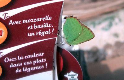 Avec Mozzarelle et Basilic...