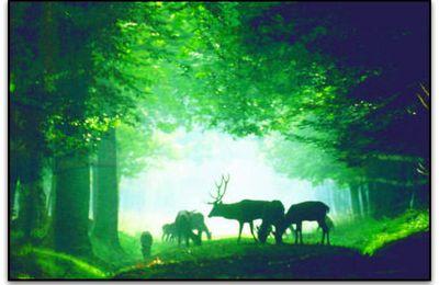 Rambouillet Le Chemin de Compostelle Sort de l'Ombre