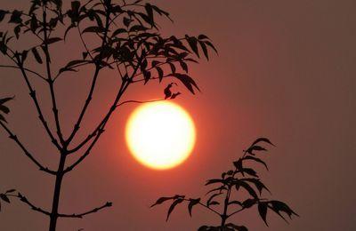 Atmosphère étrange de la nature....