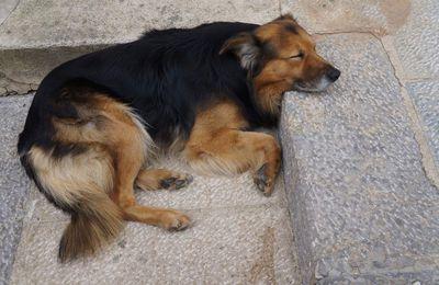 Il Can che dorme, ovvero sogni beati