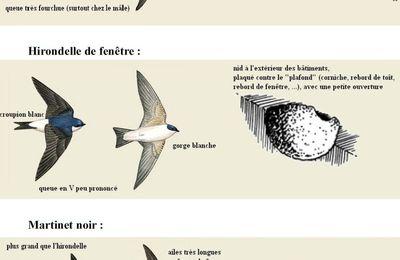 Les hirondelles sont de retour en Ile de France.