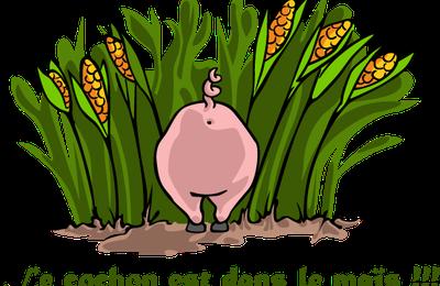 Le cochon est dans le maïs !