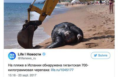 Une tortue géante de 700 kg découverte sur une plage espagnole