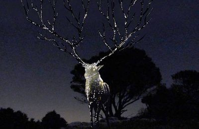 Cerf bioluminescent