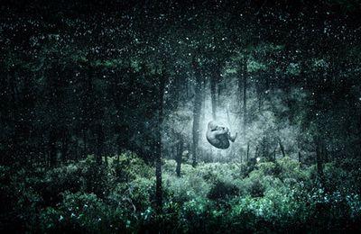Rêvant dans les entrailles de la forêt-monde