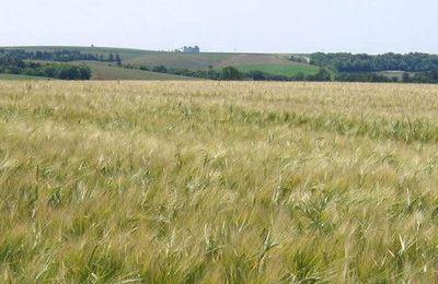 Une autre agriculture est possible: retrouvez le bio en Champagne-Ardennes