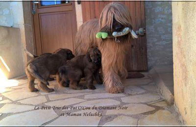 Maman Lushka et son petit Trio des Pat'O'Cou