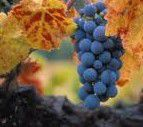 White Zinfandel Producers Central Valley California