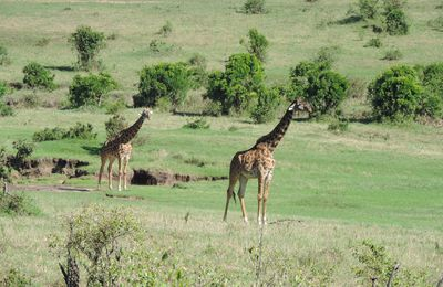 Kenya Adventure Safaris / Kenya Budget Safaris / Kenya Safaris.