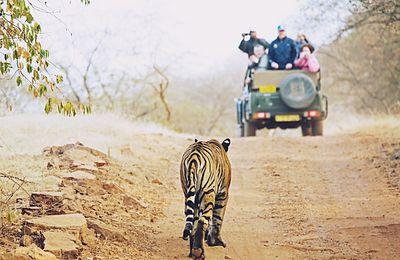Rajaji Safari in Rishikesh, Uttarakhand