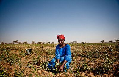 Famines: de l'urgence d'agir contre les accaparements de terre, ici et là bas
