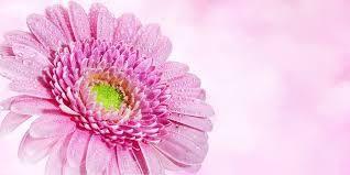 De ces mots du Coran : { Faites dépense sur les bonnes choses * que vous aurez acquises } sourate 2 , verset 267 . ( D'après Sahih el Boukhari ) .
