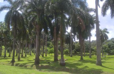 Notre voyage en Martinique