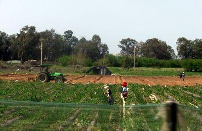 nous retrouvons la mer à KENITRA bien connue pour sa production de fraises   région d agriculture tres développée :tracteurs, chevaux,etc ...,e