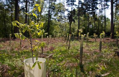 Planting saplings for a new forest