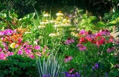 Jenis tumbuh-tumbuhan bunga segar untuk kebun Anda di musim panas