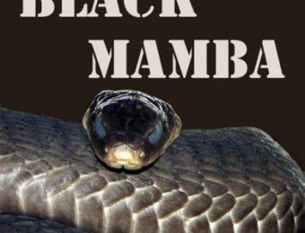 Juice: Black Mamba on the rocks