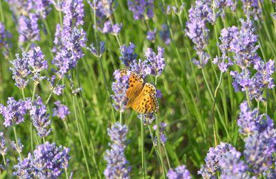 Papillons et bebêtes / Bugs and butterflies