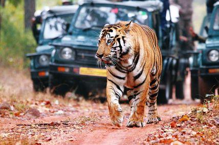 Must do Wildlife Safari at Rajaji National Park