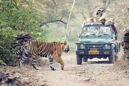 Jungle Safari, Rishikesh / Krishna Holidays