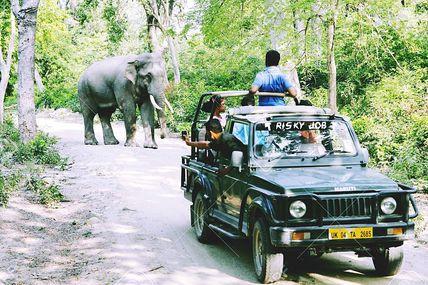 Wildlife Safari in Uttarakhand