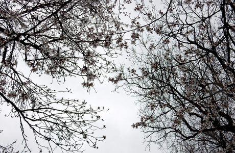 Février au jardin...