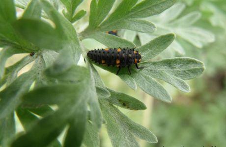 Accueillir les insectes au jardin !