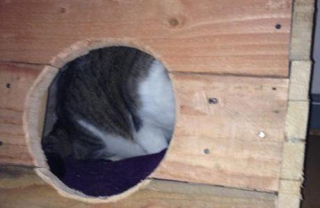 Tuto - Arbre à chats de mes chats