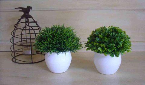 Le grenier de la presqu 39 le ce blog d co est un espace for Plantes decoratives jardin