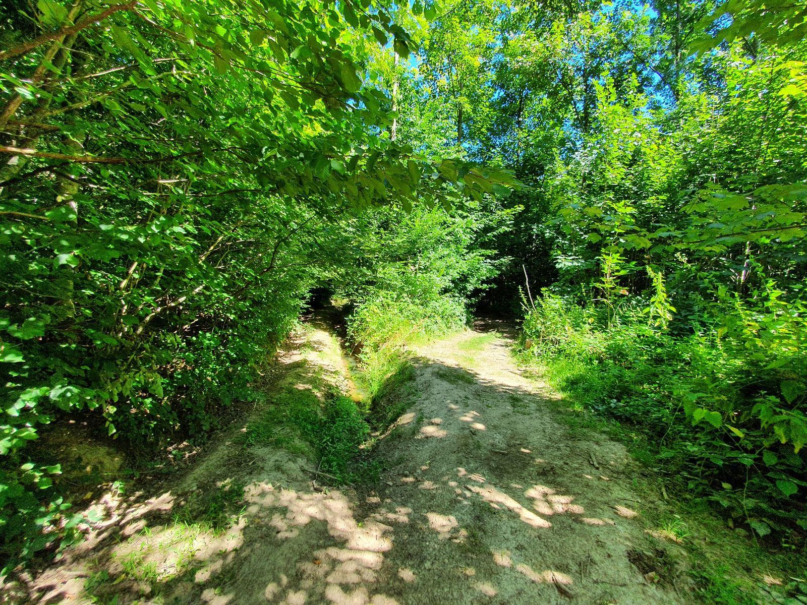 05 août 2020 - Sus-Saint-Léger et la forêt de Lucheux