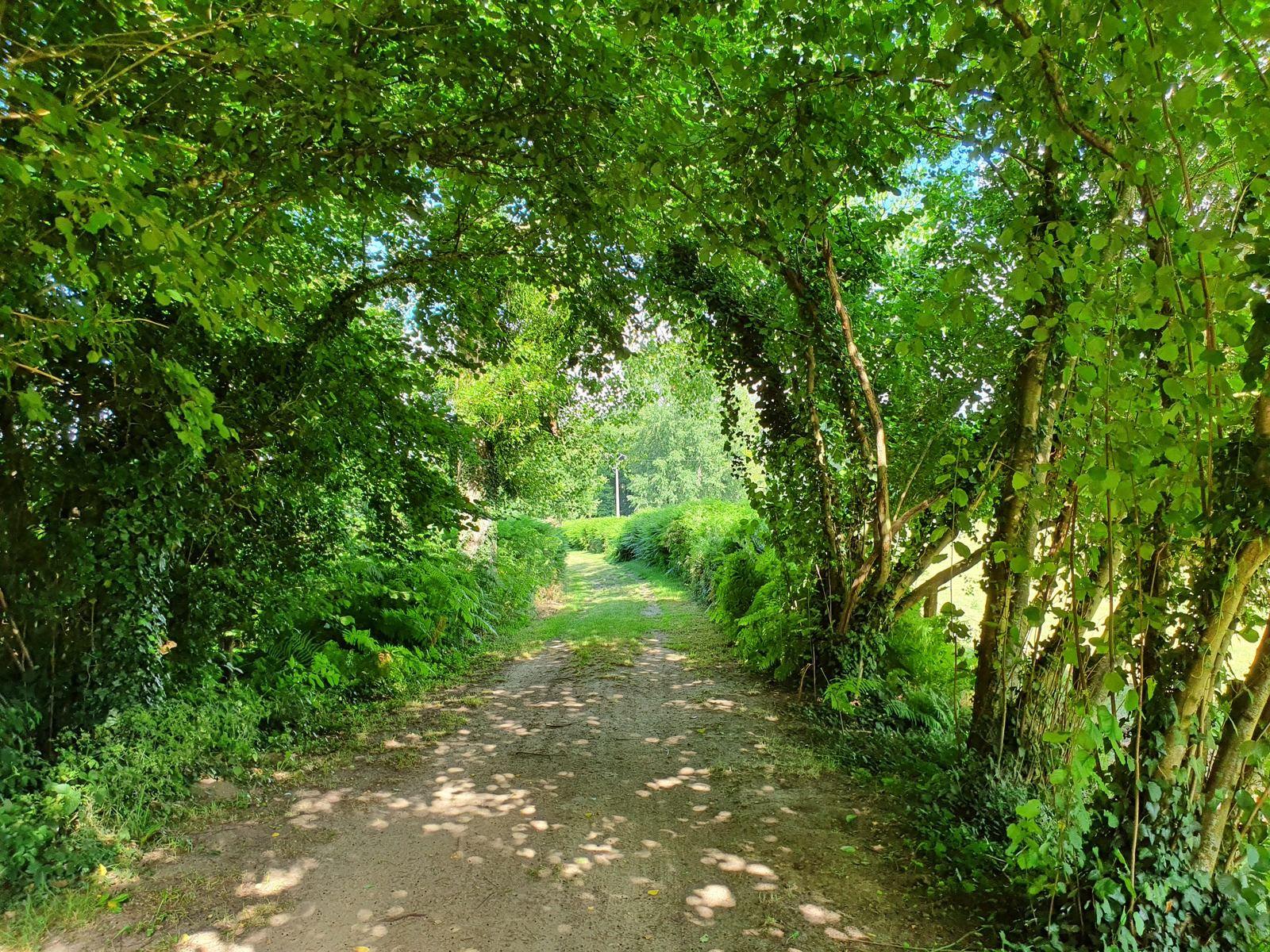 10 juillet 2020 - La Via Francigena de La Fère à Laon